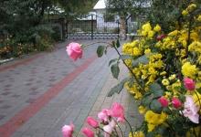 влітку наш сад розквітає і дарує чудові аромати